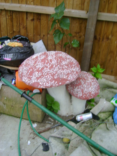 Mushrooms_in_thiefs_garden_4th_sept_2012_009