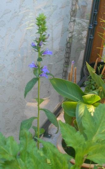 No_name_plant