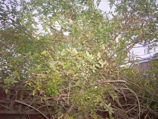 Plant5_002