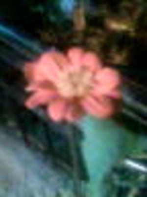 Image000