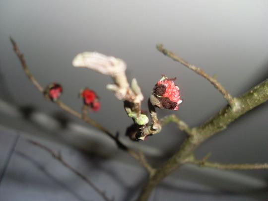 Tree_twig_022