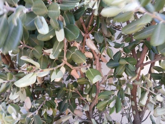 Metro_white_dry_leafs