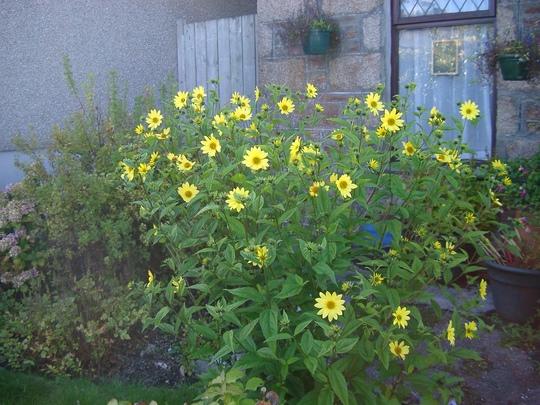 Garden_september_2013_002