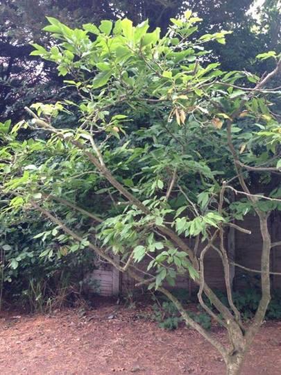 Plant33