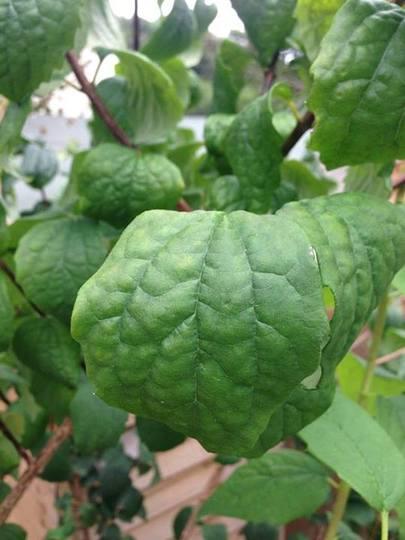 Plant20