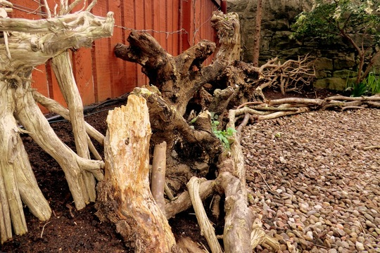 Forest_stump_2