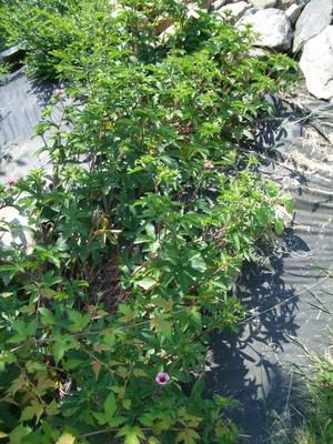 Id_plants_2010_003