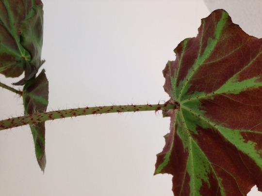Plant_photo_2