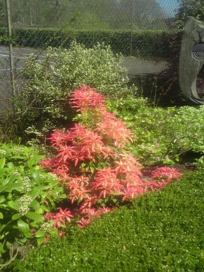 Plant3635