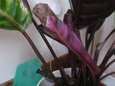 House_plant_006