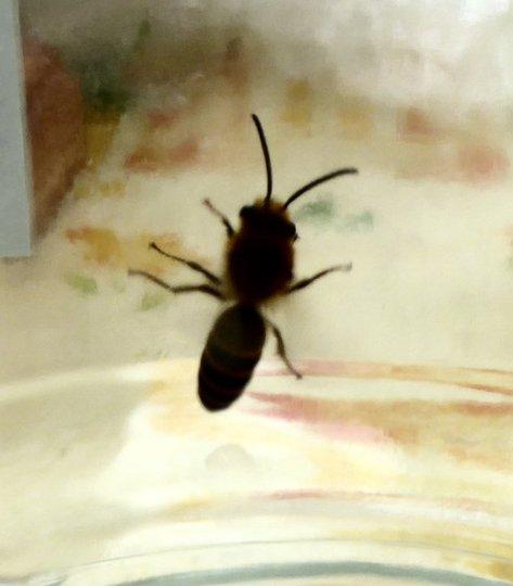 Wasp.1