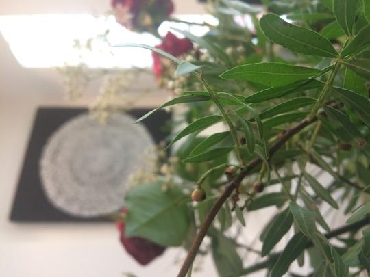 Flower_sprig_berries_query_2