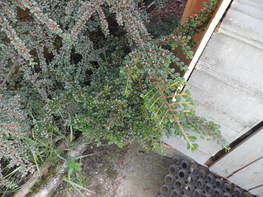 Plant_at_wee_shed_007