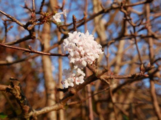 Shrub_flower02_29_nov_2020