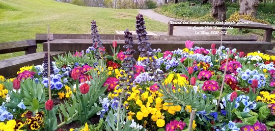 Raised_bed_with_unknown_dark_purple_flowers_on_castle_hill_huntingdon_1st_may_2021_002