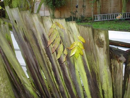 Gardenpictures1110_004