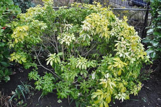 Garden_20110317_1392march_2011