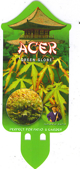 I Have Just Posted A Photograph Of My New Acer Green Globe Grows