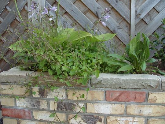 Garden_wall1