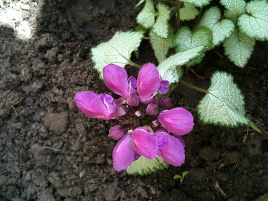 Plant_id_2