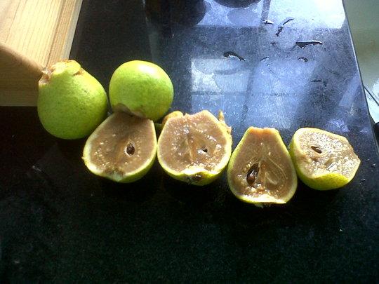 Strange_pear_2