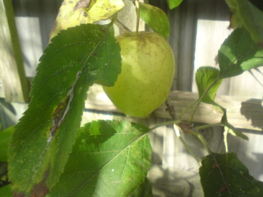 Apple1201