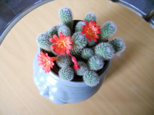 Cactus_06_04_12_003