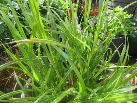 Grass_002