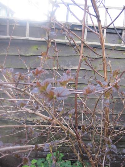 Garden_10_4_2012_019