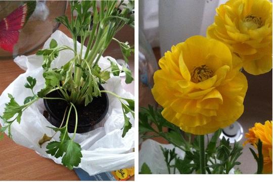 Nans_plant