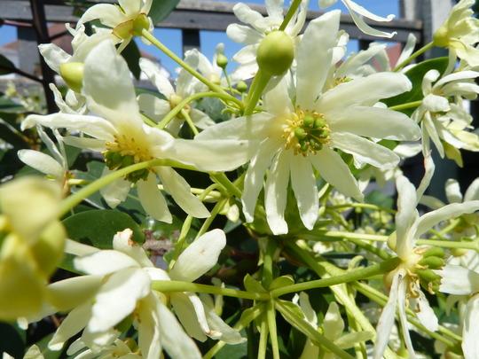 2012_05_27_garden_flowers_fruit_may_2012_002