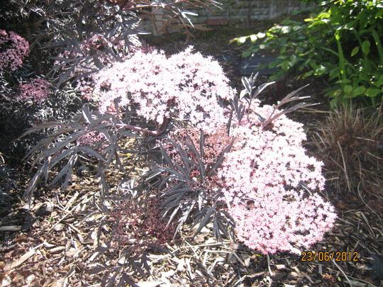 Garden_2012_021