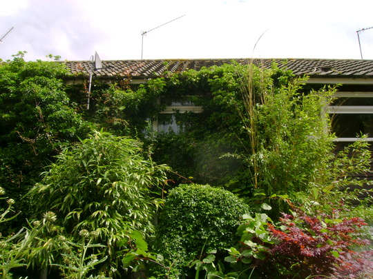 My_front_garden_or_jungle_should_i_say_2012_005