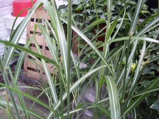 Grass_2_120826_1_