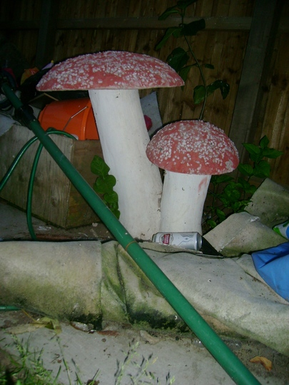 Stolen_mushrooms_september_the_4th_001