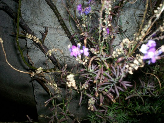 Plant_id_14_001