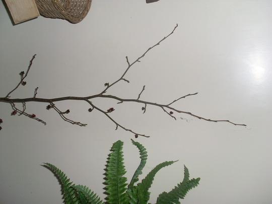 Tree_twig_020