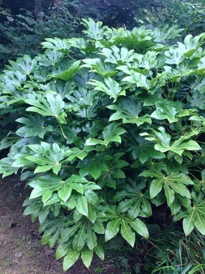 Plant29