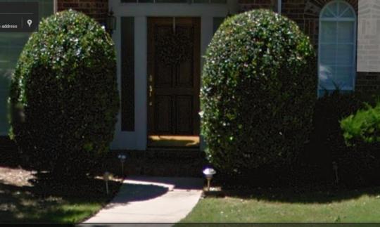 Front_door_bushes