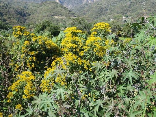 Yellow_shrub_in_ditch