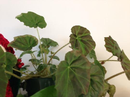 Plant_photo_3
