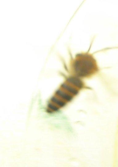 Wasp.2