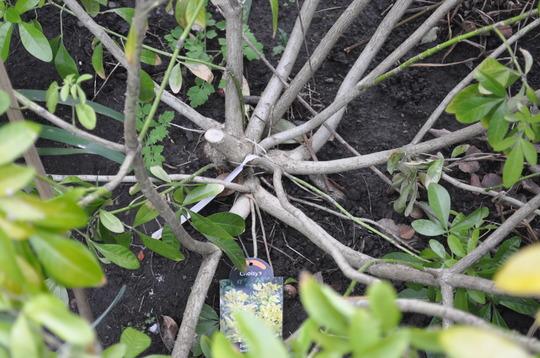 Garden_20110317_1394march_2011