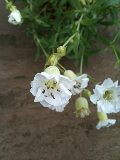Plant_id_5
