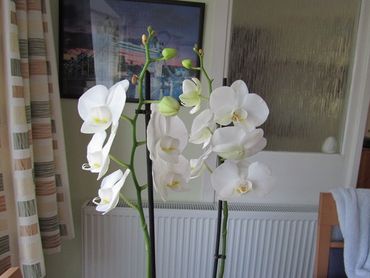 Orchid_apr11