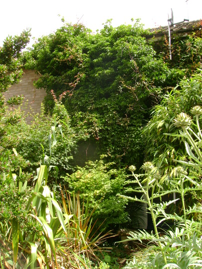 My_front_garden_or_jungle_should_i_say_2012_008