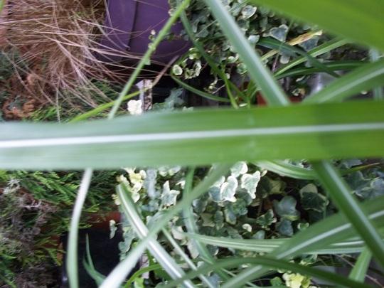 Grass_2_120826_2_