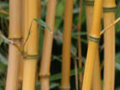 Bamboos, Grasses & Ferns