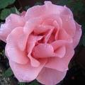 gardendaz
