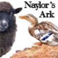 naylorsark